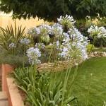 Jardines+chalets+construccionesramoslevante (77)
