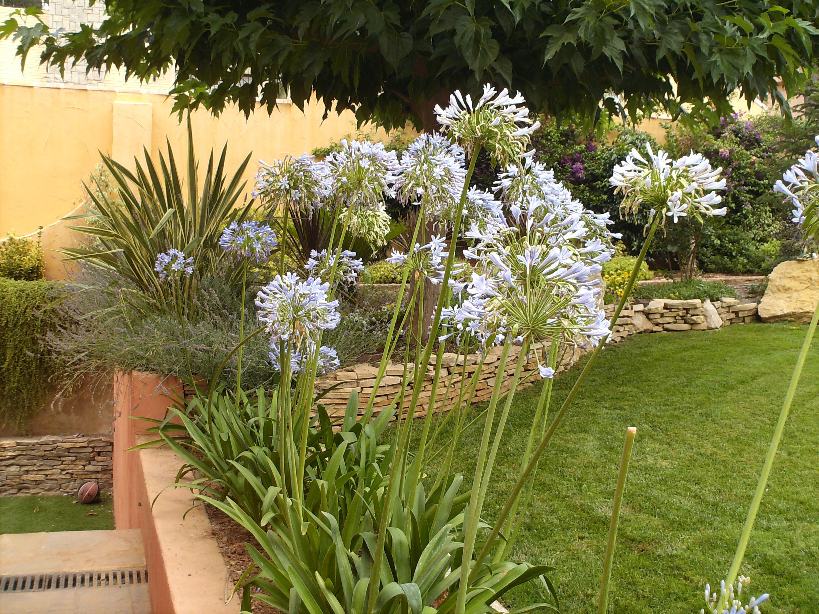 Jardines de exterior dise os arquitect nicos for Jardines de exterior